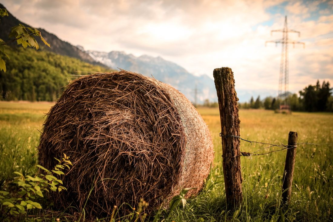 agriculture-country-countryside-518557