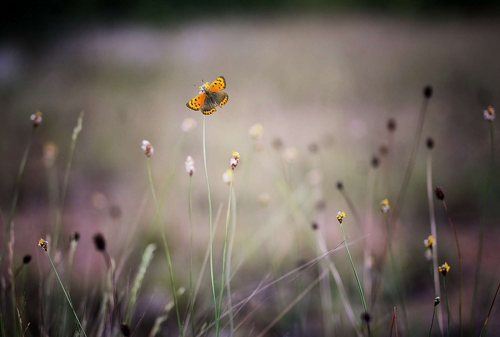 bloom-blossom-blur-128342